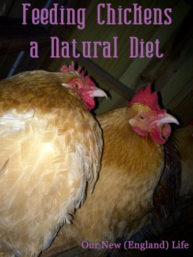 Feeding Chickens a Natural Diet